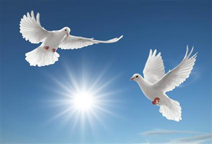 middle_Nice-Pigeon-Wallpapers